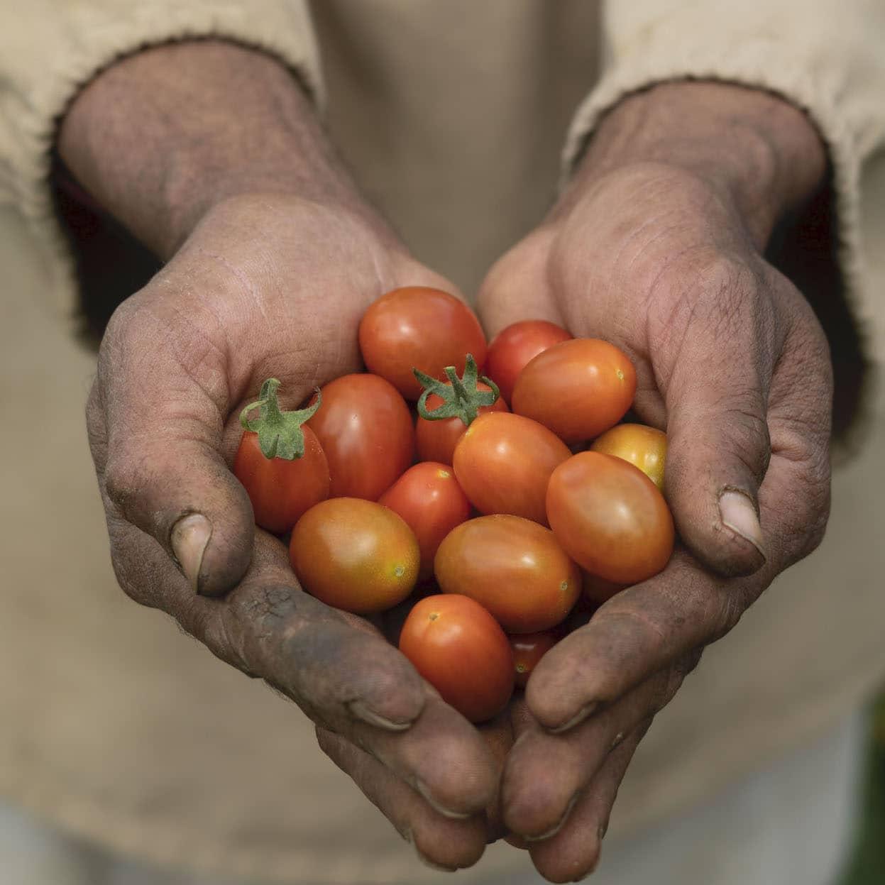Antioquia apuesta por la transformación de sus sistemas de alimentación y uso del suelo